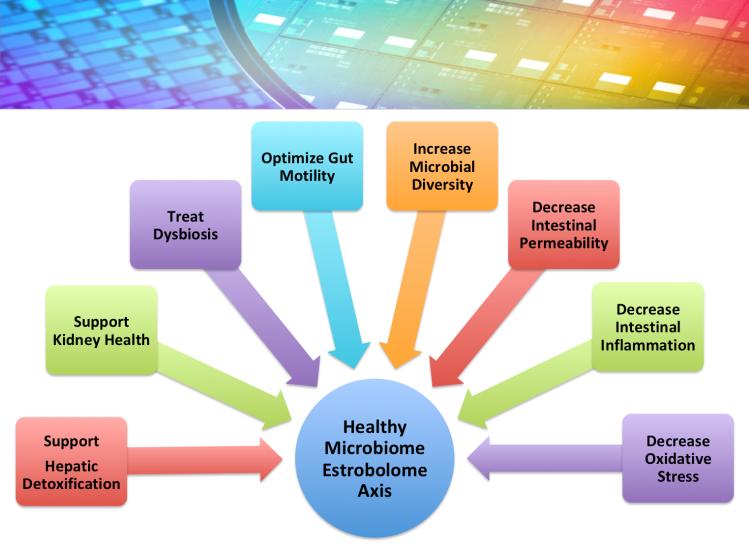 Healthy Microbiome Estrobolome Axis Image.png